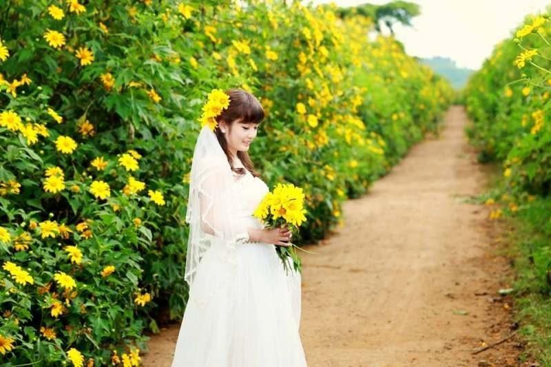 chụp ảnh cưới ở con đường hoa dã quỳ
