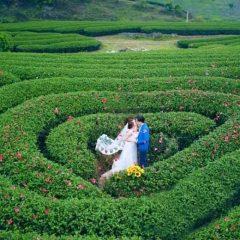 chụp ảnh cưới ở đồi chè mộc châu