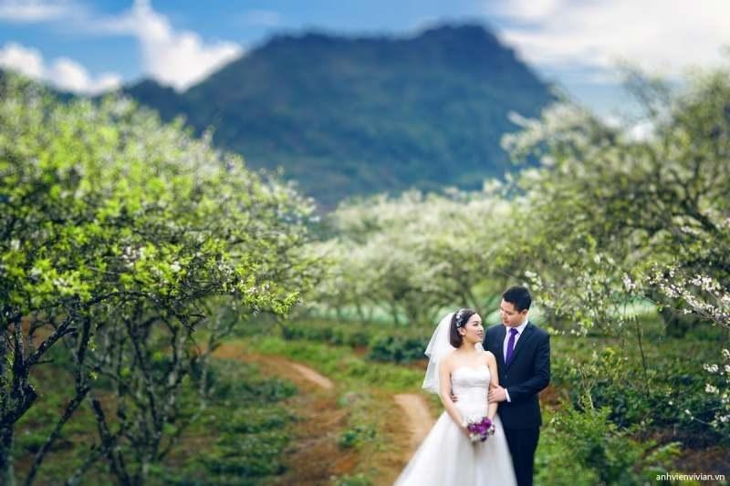 chụp ảnh cưới ở vườn hoa mận trắng